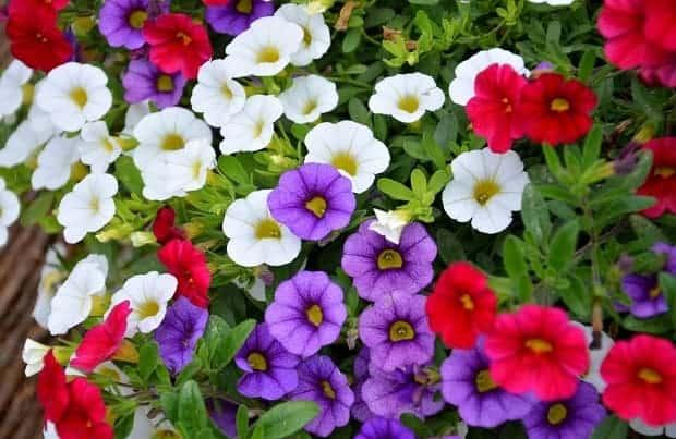 Зеленые листья и разного цвета цветки