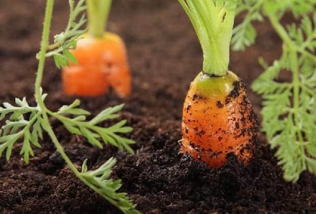 Выращивание овощей в кислом торфе
