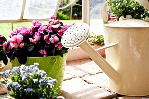 чем можно удобрять домашние цветы