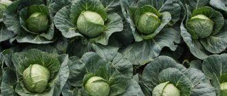 Правильная посадка для повышения урожайности