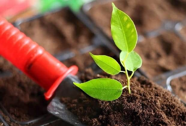 торф для выращивания рассады