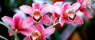 Ветка с множеством больших ярких цветов