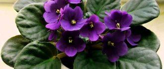 Разноцветные глиняные горшки для домашних растений
