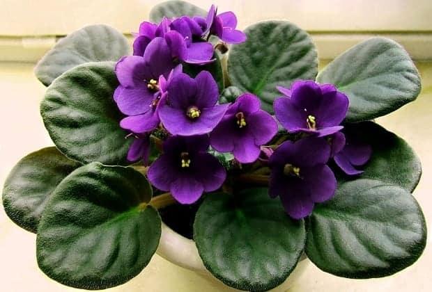 удобрение для комнатных растений с дрожжами рецепт