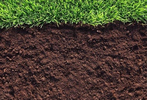 Выращивание и доставка густой газонной травы
