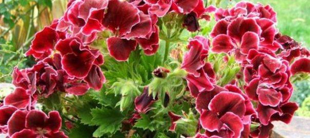 Выращивание в теплице и реализация в москве