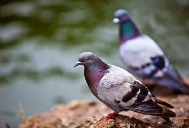 Выращивание птицы для распространения в больших городах