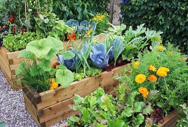 Фосфорно-калийные удобрения, использование для подкормки растений