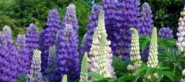 Поле цветов расположено возле леса