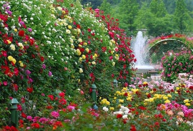 Парковая аллея в большом количестве разных цветов