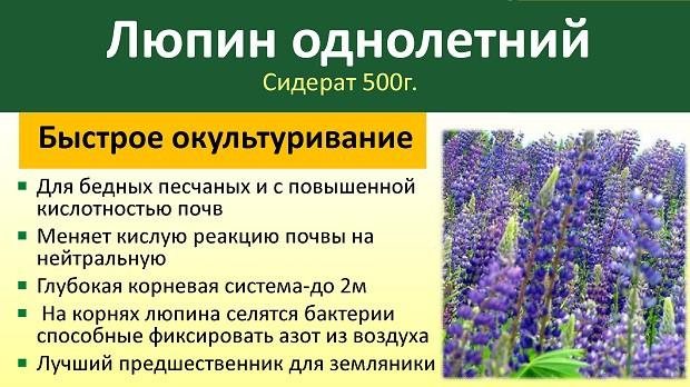 Люпин как сидерат для огорода, виды, выращивание и заделка в грунт