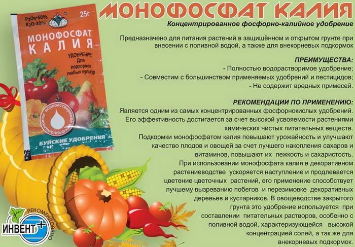 Монофосфат в качестве осеннего удобрения сада