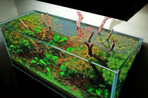 Подкормка для аквариумных растений